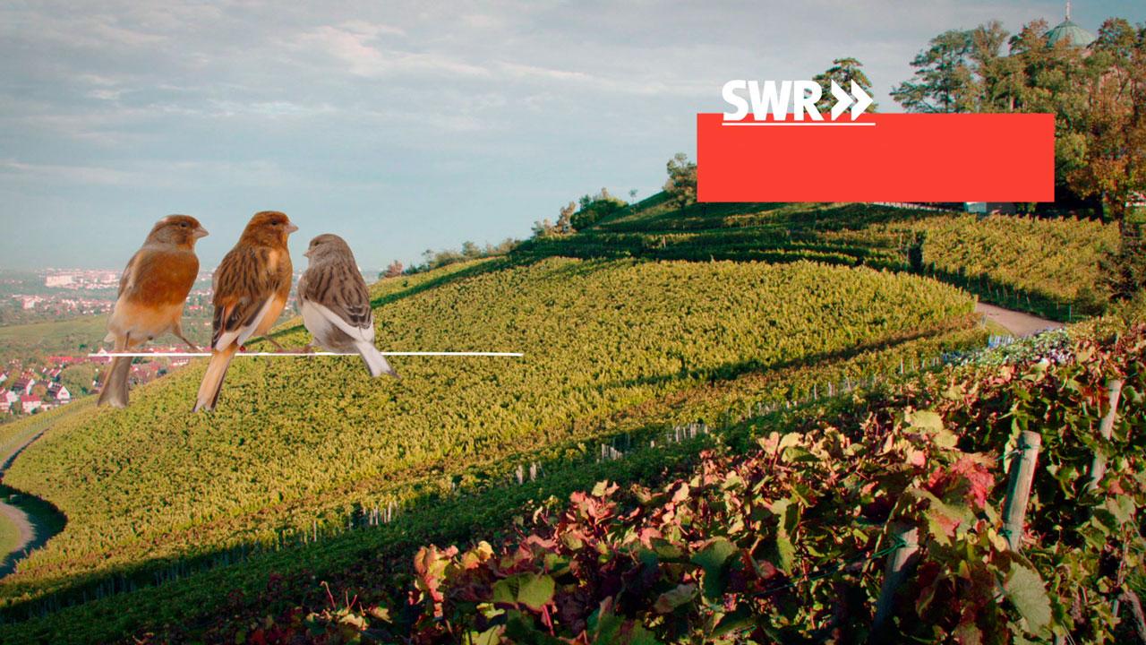 SWR_Weinberge_02