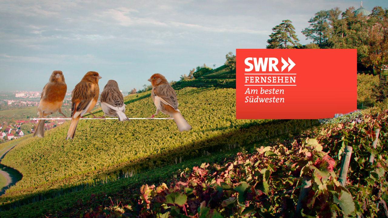 SWR_Weinberge_05